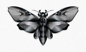 Death Head Moth Student Concept