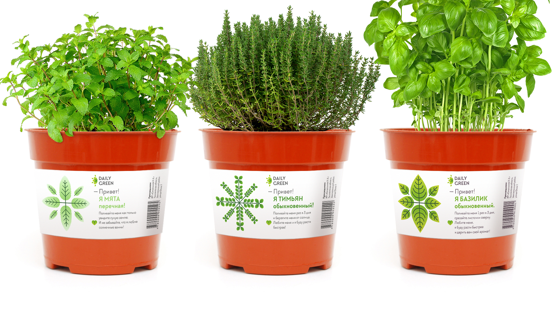 Fresh Greens and Spices in Pots