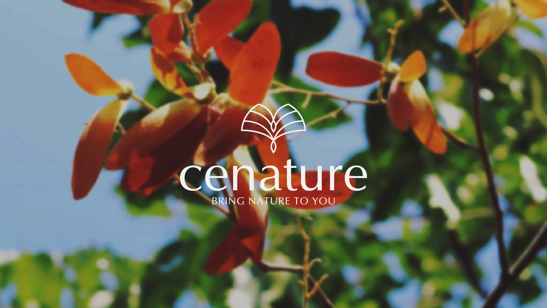 Logo and Brand Identity for Cenature Cosmetic Designed by Overlay Vietnam