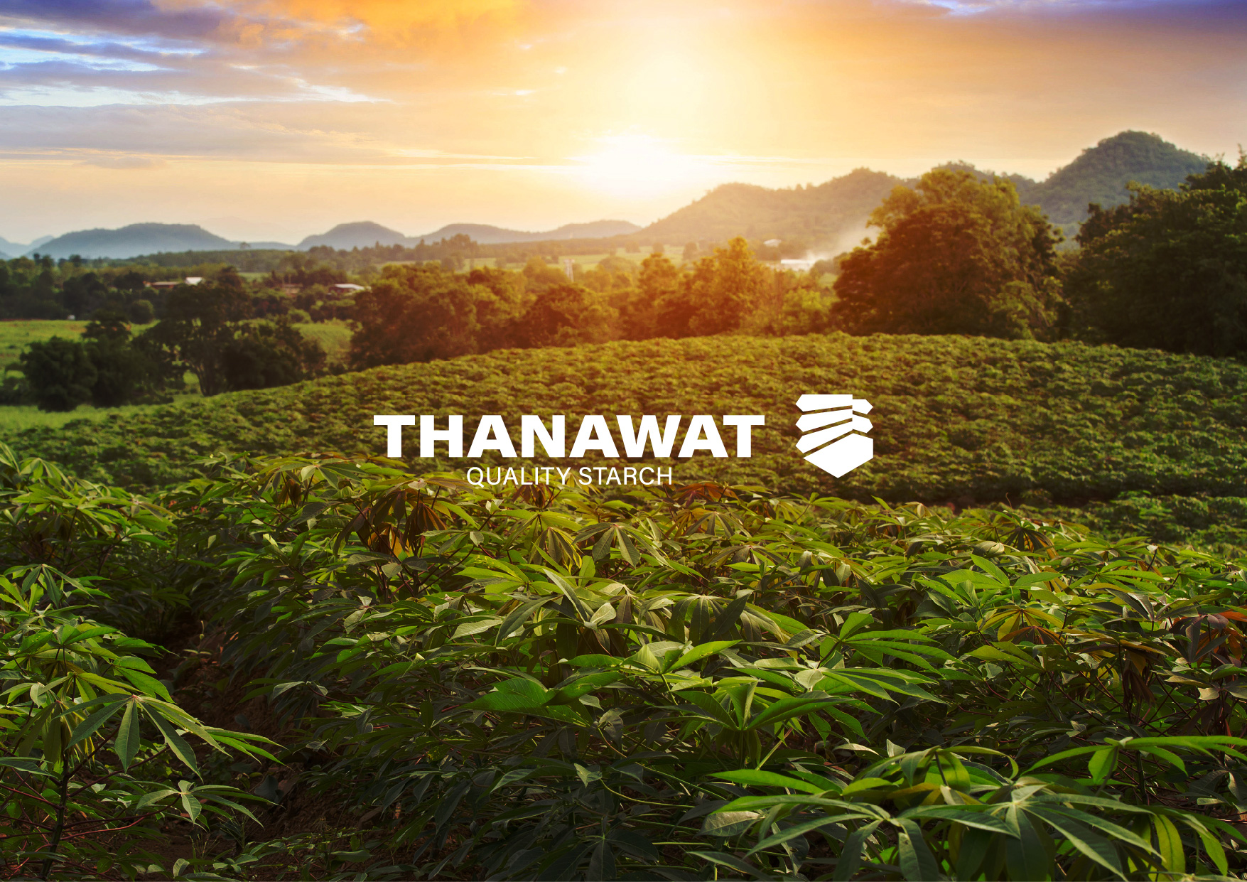 Thanawat Quality Starch and Chakangrao Starch Manufacturer Re-Branding